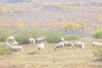 Youyu County
